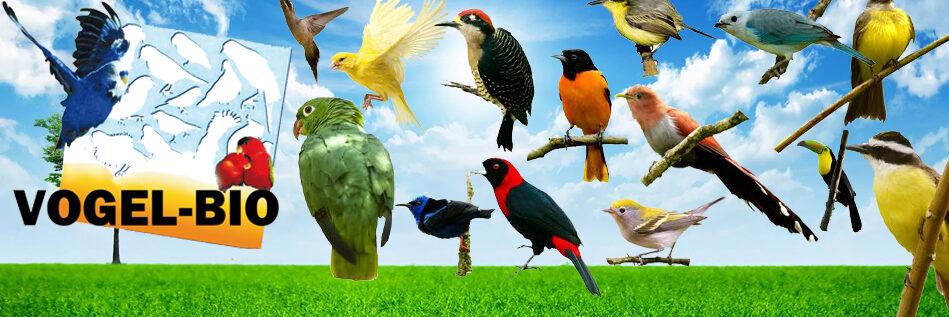 Vogel-bio is verhuisd naar www.quikovoeders.nl